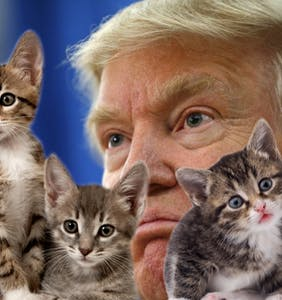 Trump threatens 17-year-old for creating online game where he gets attacked by kittens